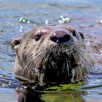 Otterscan