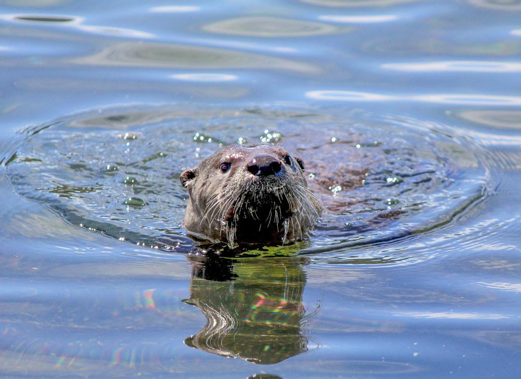 Otterscan showcase